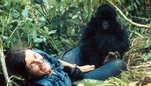 Dian Fossey, au plus près des gorilles - AgoraVox le média citoyen