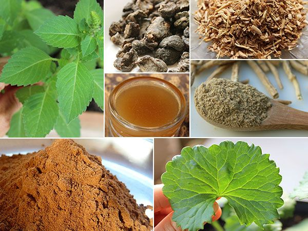 Image result for Growing Attention towards Ayurveda and Its Positive Influence over Life