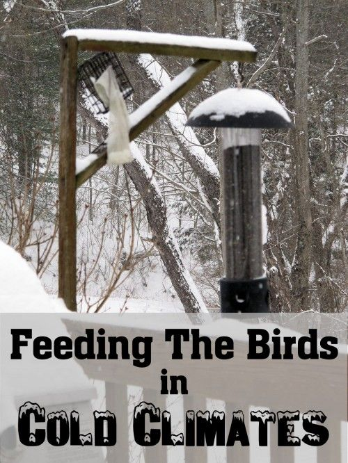 Some Things You Should Know About Bird Feeding in Cold Climates