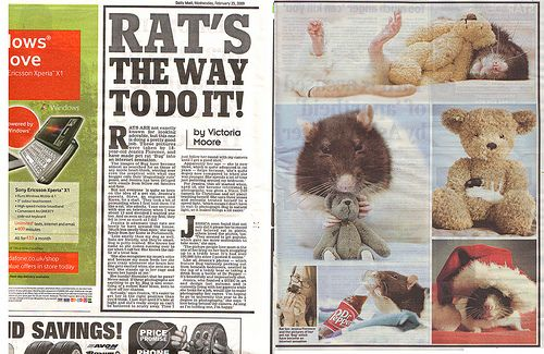 omg. Daily Mail 25th February.  www.dailymail.co.uk/news/article-1153931/On-rat-walk-Rode...  www.thesun.co.uk/sol/homepage/news/article2267700.ece  I have been so busy I haven't been around here much :( I will catch up ASAP!  Thankyou sooo much everyone <3