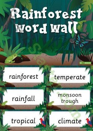 Rainforest Word Wall Vocabulary