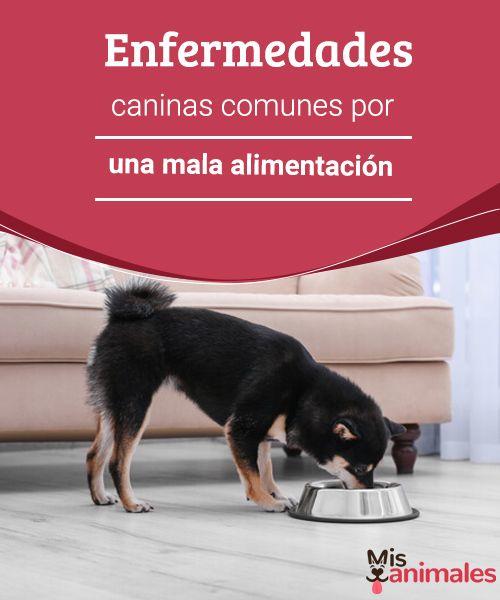 Enfermedades caninas comunes por una mala alimentación   Somos lo que comemos. La alimentación de tu mascota es esencial para que sea un perro sano y feliz. Te damos unos consejos y recordatorios sobre esta. #enfermedades #mala #alimentación #salud