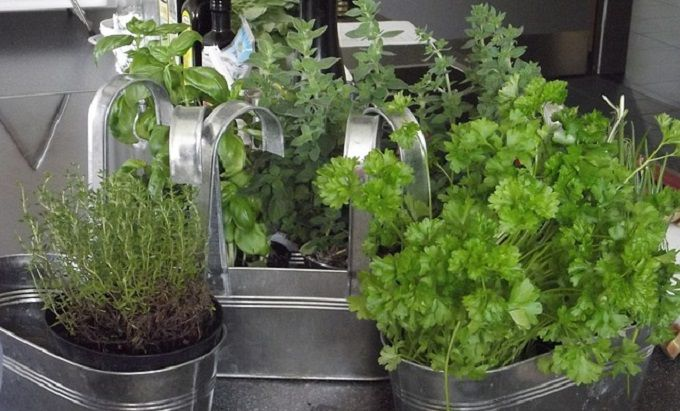 Les 25 meilleures id es de la cat gorie herbes aromatiques sur pinterest jardin d 39 herbes - Comment conserver du basilic ...