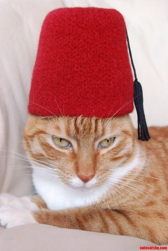 Fezzes are cool  I wear a fez now Fezzes Are Cool Cat