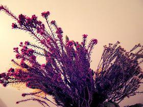 Mademoiselle Cosmopolite: Cette semaine, dans mon pot Mason: Fleurs d'automne