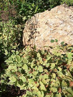 Dekorative Bodendecker Oder Unkraut Ein Zweiter Blick Von Vicki
