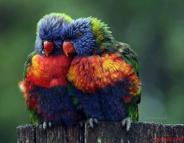 Community Post: 5 Cute Animal Photos To Cheer You Up - On to the bird family! All birds are cute, but this parrot couple wins the prize for today!