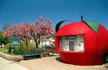 Apple.  Meaford, Ontario.