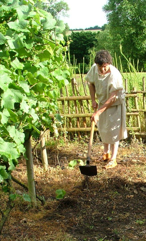The Roman gardener weeding the vines.