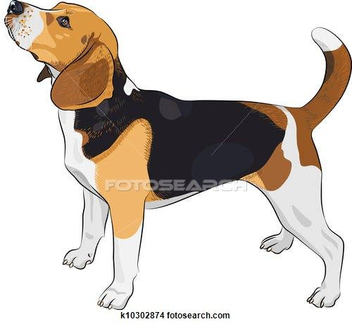 Stock Illustration of vector sketch dog Beagle breed