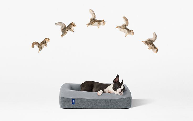 Casper has turned their sights to the dogs, engineering a durable dog bed designed with uniquely-canine behavior in mind.