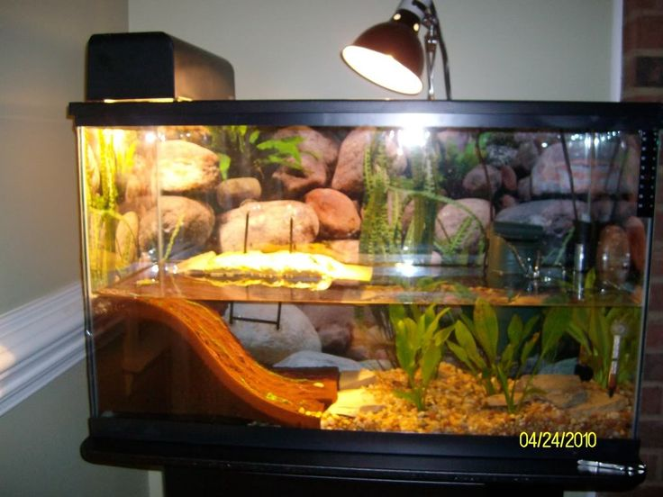 Best 25 Red eared slider tank ideas on Pinterest Red
