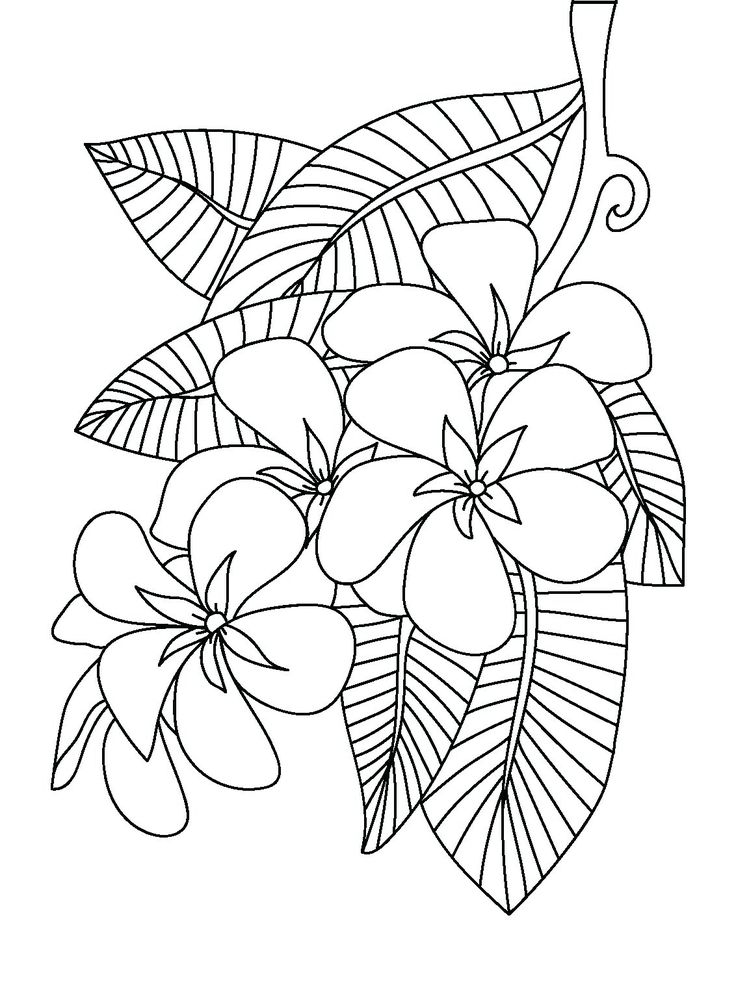 coloring pages of plumerias - photo#13