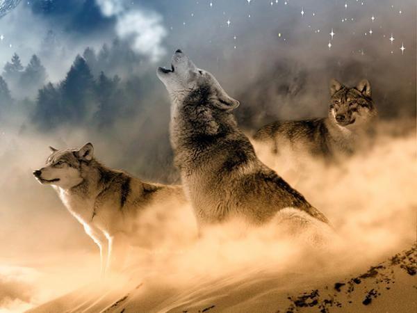 Animales De Poder Lobo