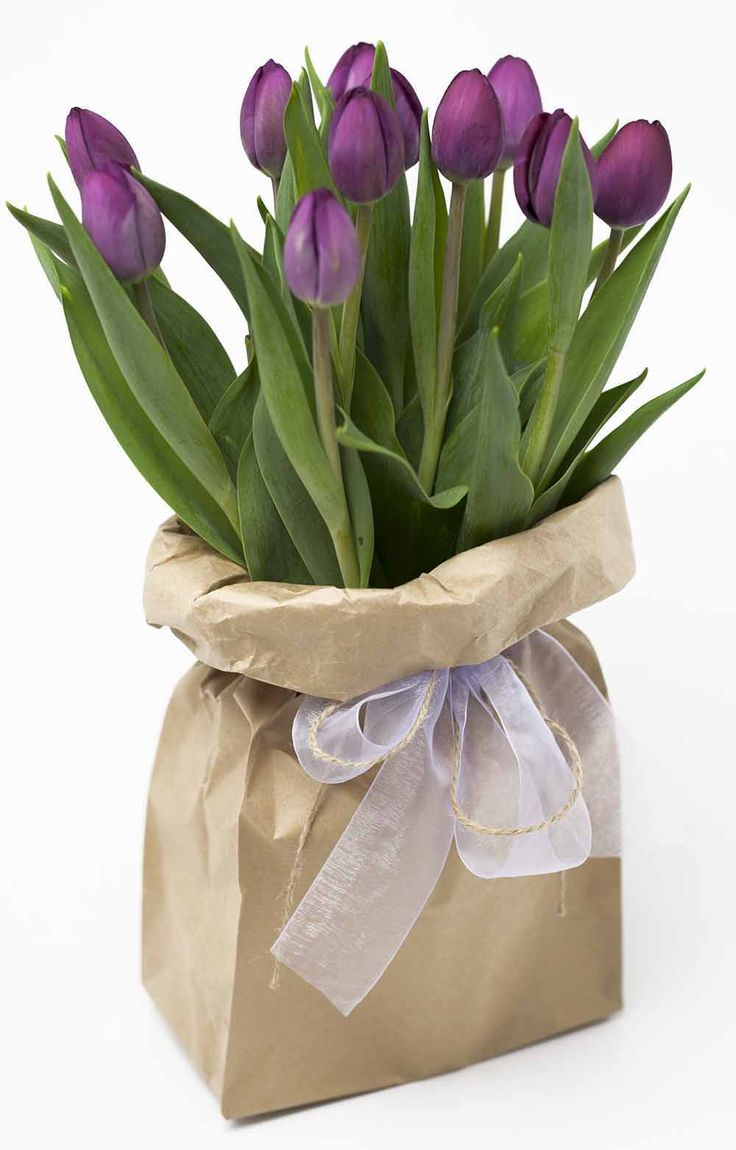 Funky Bagged Purple Tulips http://www.expressionsfloral.co.nz/buy-flowers/mothers-day/funky-bagged-tulips-cambridge-hamilton-florist #Mothersday #tulips #purple