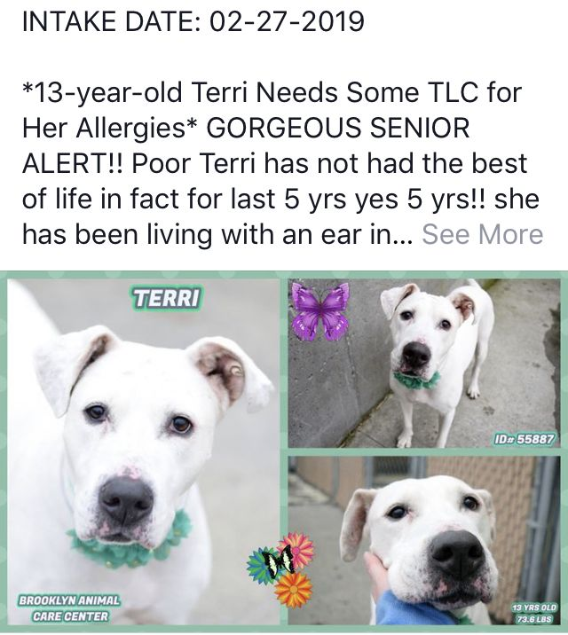 Terri Needs Help Nyc Dogs Staten Island New York