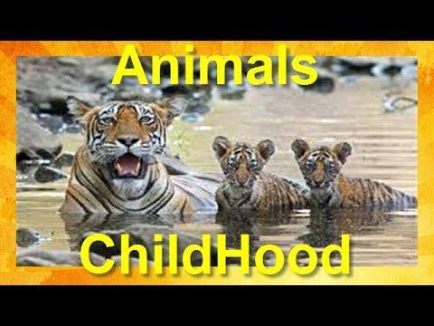 Discovery Documentary - Animal Childhood - Nature Documentaries