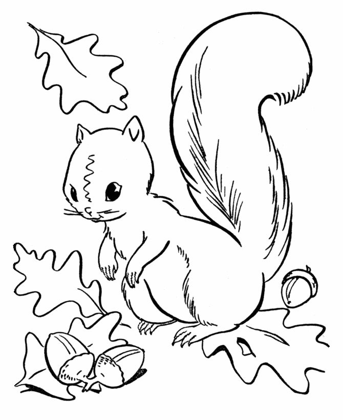 fall season coloring page squirrel collecting acorns - Leaf Coloring Pages Preschool