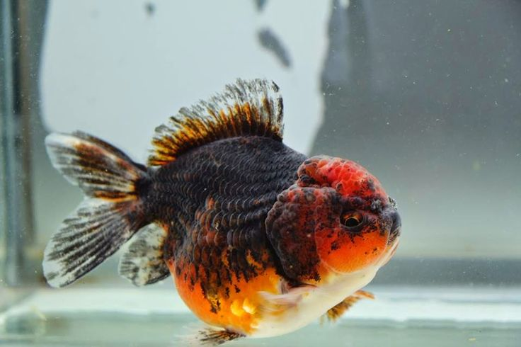 потрясающие фотографии аквариумных рыб подходящий