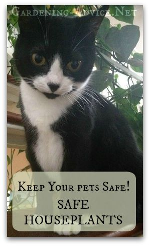 House Plants Safe For Cats - Pets And House Plants Tips