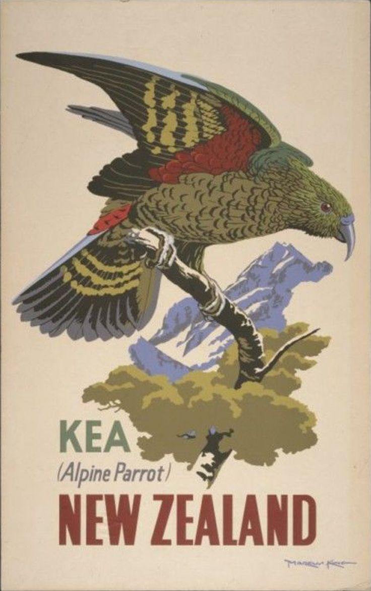 travel poster vintage new zealand - Google Search