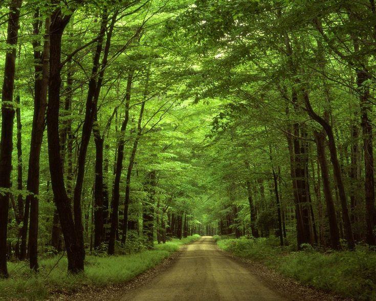 Fondo-de-pantalla-Naturaleza-104.jpg (1280×1024)