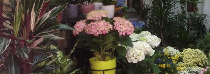 Floristerías en Valencia   Alternatives Florals
