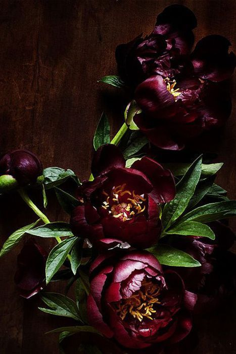 A jewel tone color pallet especially if you are having a fall or winter wedding: