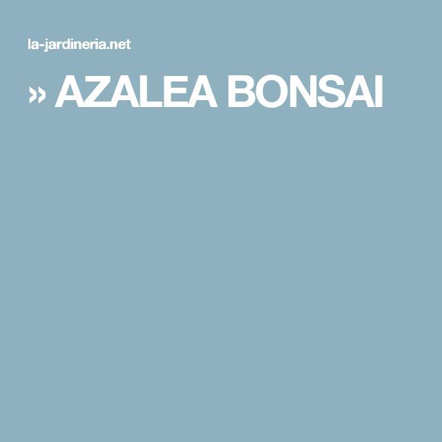 » AZALEA BONSAI