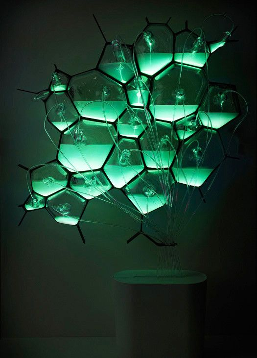 Bio-Light by Philips is a concept design and consists of hand-blown glass cells containing bioluminescent bacteria and their food source, composting sludge. #Philips #Bio_Light #Bioluminescent _Bacteria
