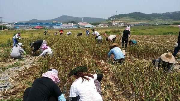 장산중학교, 면사무소와 함께 농촌 봉사 활동 실시