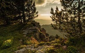 Обои Швейцария, Альпы, горы, Switzerland, деревья, гора Нидерхорн, Mount Niederhorn, Alps