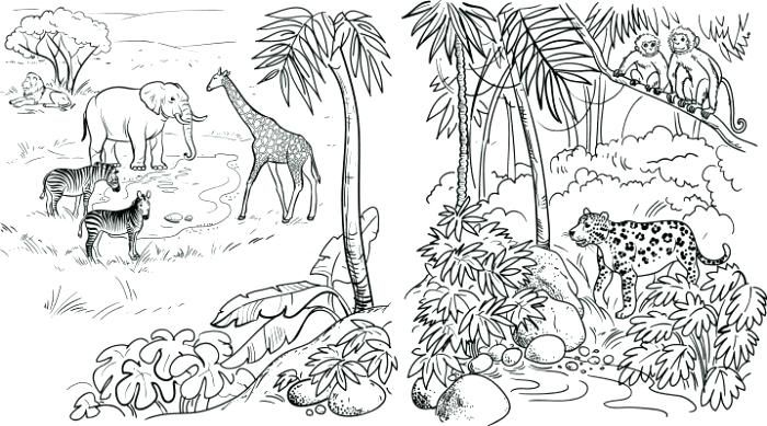 Grab Your Fresh Coloring Pages Jungle Download Https Gethighit Com Fresh Coloring Pages J Animal Coloring Pages Jungle Coloring Pages Turtle Coloring Pages
