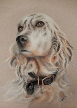 Jacquie Ellis  NZ artist - Jacquie does commission  pet portraits under the name Pets in Pastel - check her out on facebook Gem - English Setter