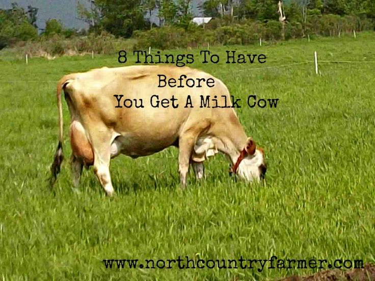 8 Things To Have Before You Get A Milk Cow