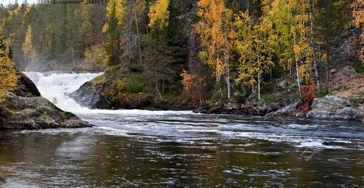 Karhunkierros - Oulangan Oulanka kansallispuisto Karhunkierros Kitkajoki Jyrävä joki koski putous virta vesi virrata kuohu jylhä syksy ruska
