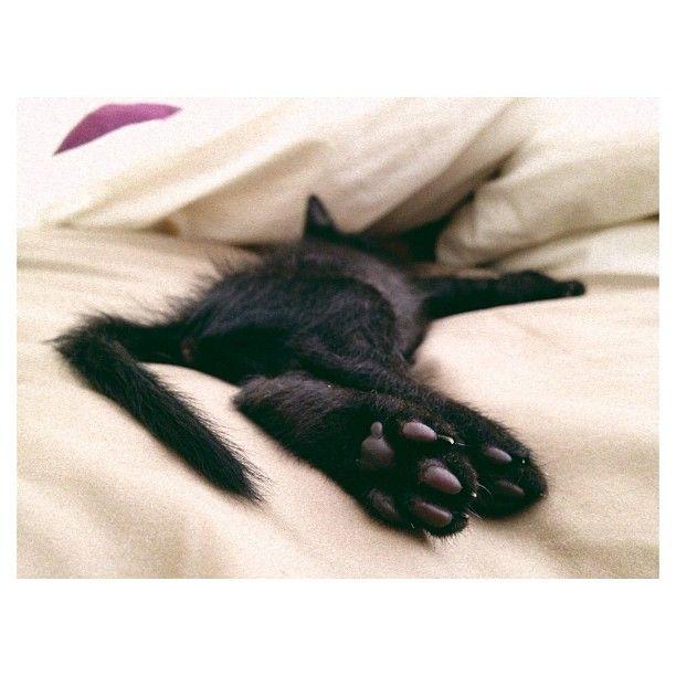 lazyyy kit cat.
