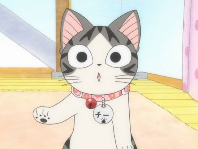 Chii Cat Animation D