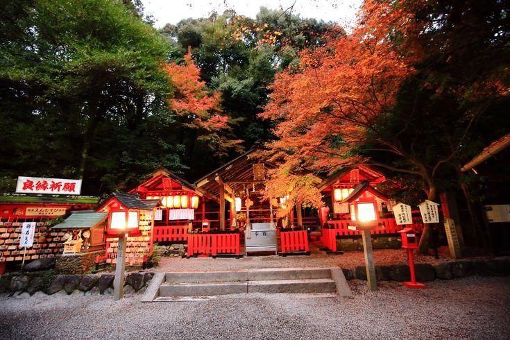 京都嵐山の縁結びとして知られる野宮神社の見ごろの紅葉