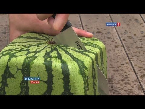 Square watermelons Japan. English version - YouTube