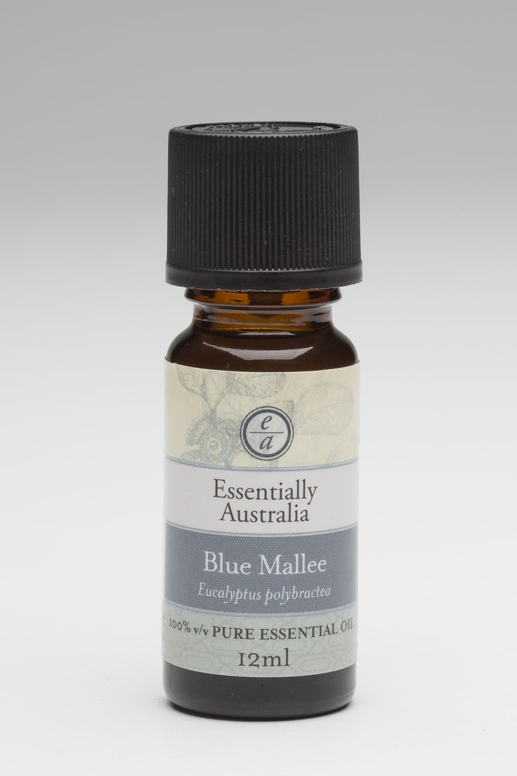 Eucalyptus - Blue Mallee (Eucalyptus polybractea) The Eucalyptus oil with the most medicinal aroma of all the Eucalyptus.