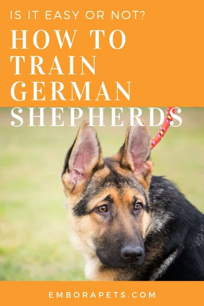 Thinking About Owning A German Shepherd But Aren T Sure If They