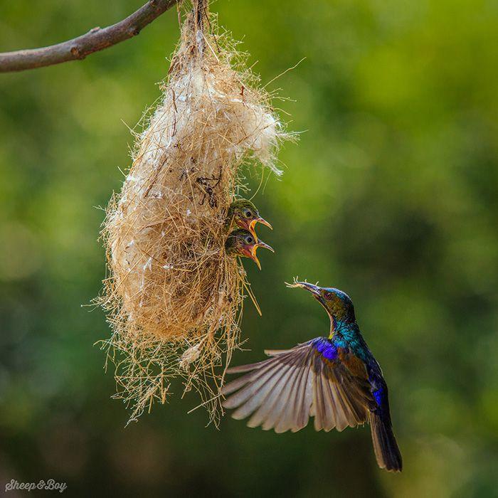 24 Birds Taking Care of Their Adorable Birdies