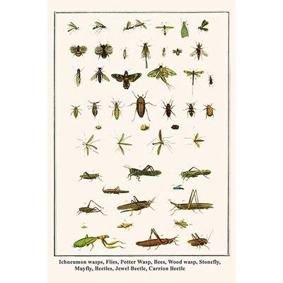 """Buyenlarge 'Ichneumon Wasps Flies Potter Wasp Bees Wood Wasp Stonefly Mayfly' by Albertus Seba Graphic Art Size: 42"""" H x 28"""" W x 1.5"""" D"""