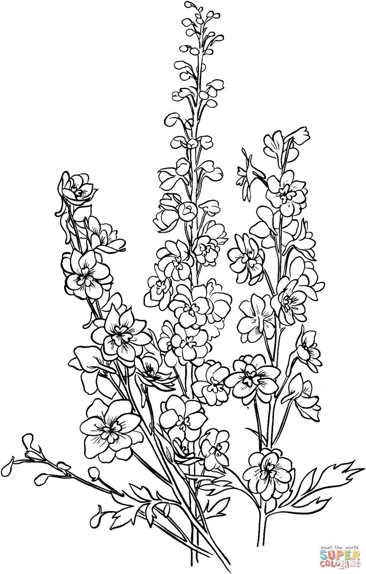 Delphinium Super Coloring Drawing Flowers 2