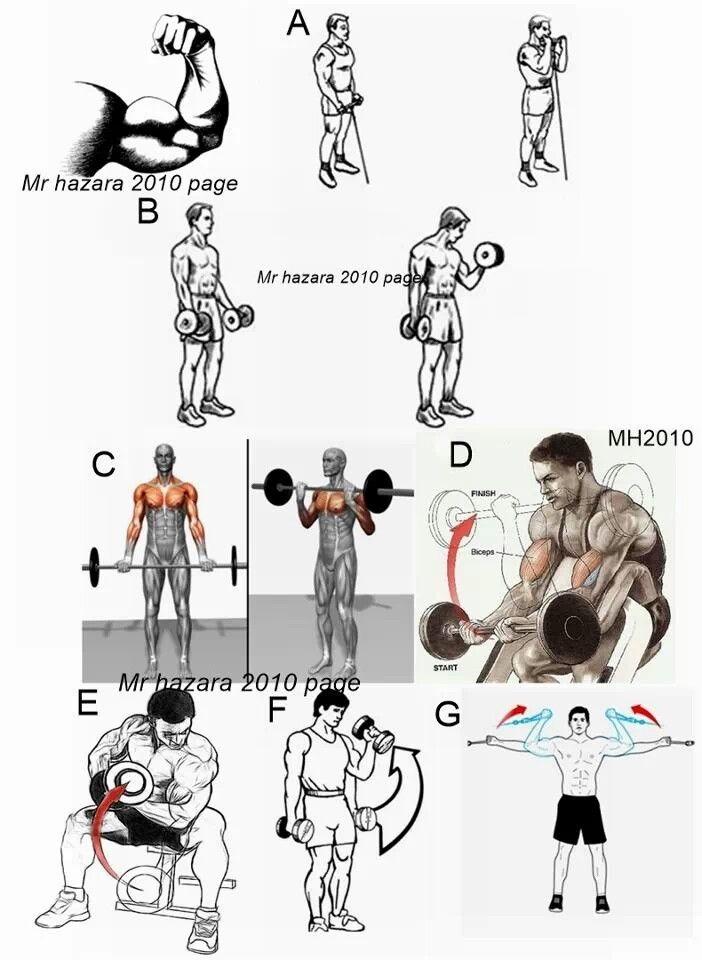 25+ best ideas about Biceps Workout on Pinterest ... | 702 x 960 jpeg 82kB