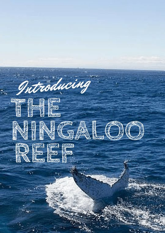 http://www.thetechgypsy.com/why-the-ningaloo-reef-should-be-on-your-bucket-list/