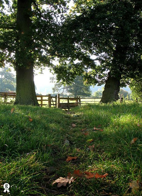 An autumn morning walk in Old England.You could see lots of autumnal sights on our Cotswolds trips :) Just call or check out our website for more details #GreenerPastures
