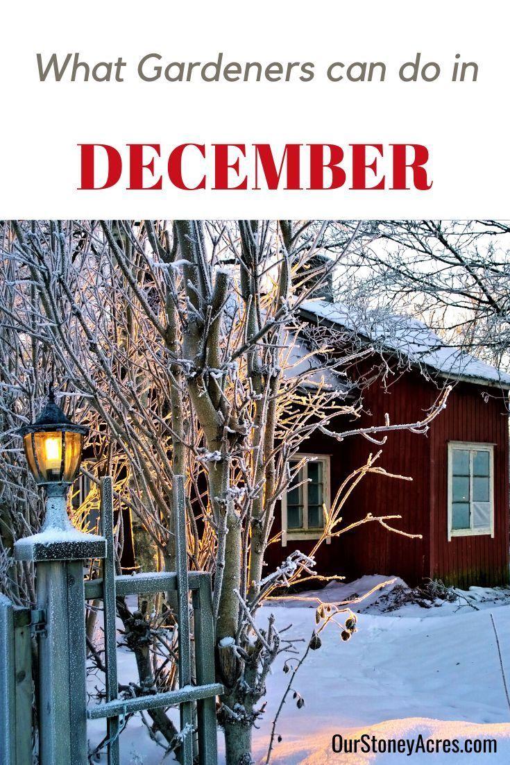 d98df7740b809ff03c1e0ba949670c56 - What Can Gardeners Do In Winter