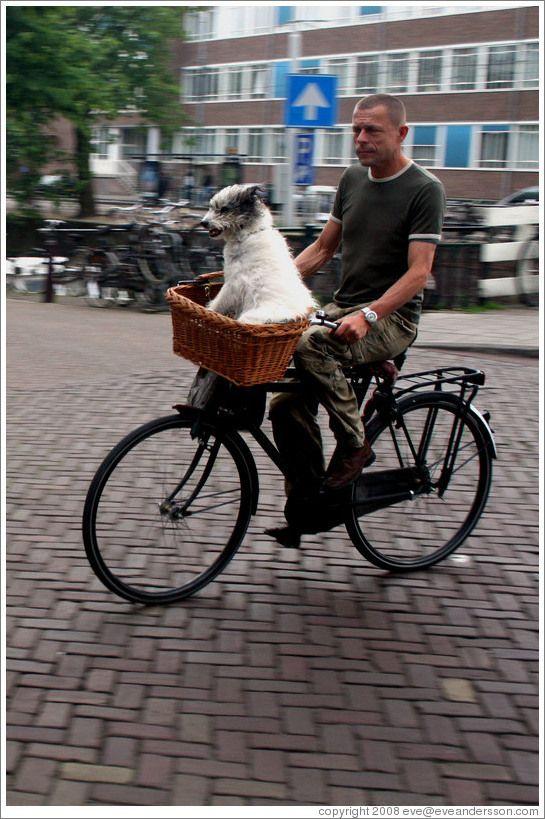 Amsterdam Dog In Bike Basket Funny Bicycle Pinterest